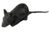 Мыши и мышки - Черная крыса