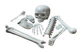 Скелеты и Зомби - Кости скелета 10 шт