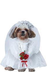 Ненаглядная невеста