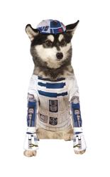 Костюмы для собак - Костюм R2D2 для собак