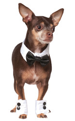 Костюмы для собак - Костюм Стильного Мистера для собаки