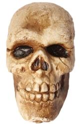 Скелеты и мертвецы - Состаренный череп