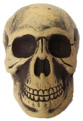 Скелеты и мертвецы - Старый череп
